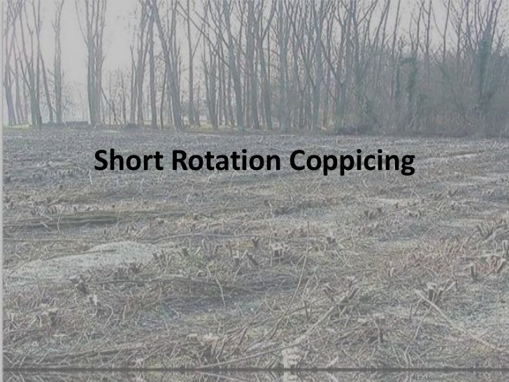 Short Rotation Coppicing<br />