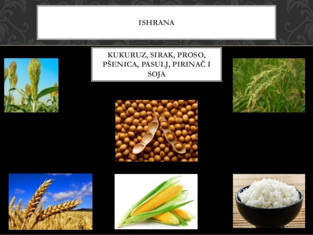 Srednja Amerika - Prirodna bogatstva i privreda Slide 3