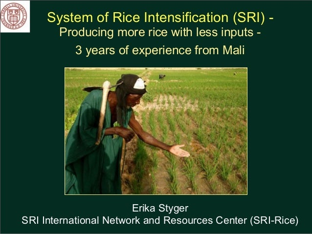 System of Rice Intensification (SRI) - Producing more rice with less inputs - 3 years of experience from Mali Erika Styger...