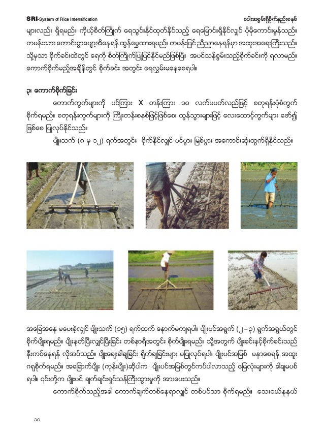 11 pyg;tpGrf;&Sdpdkufenf;pepfSRI-System of Rice Intensification