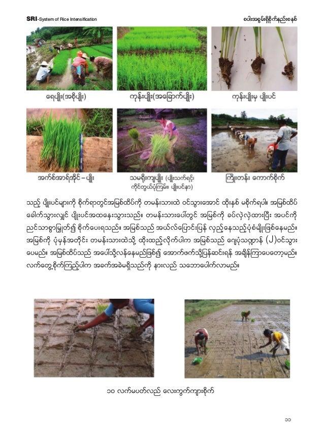 12 pyg;tpGrf;&Sdpdkufenf;pepfSRI-System of Rice Intensification rpdkufrD wD ajraqG;BuJyuf ( oDEéDNrdKUe,f) aygif;rxdk;rD w...