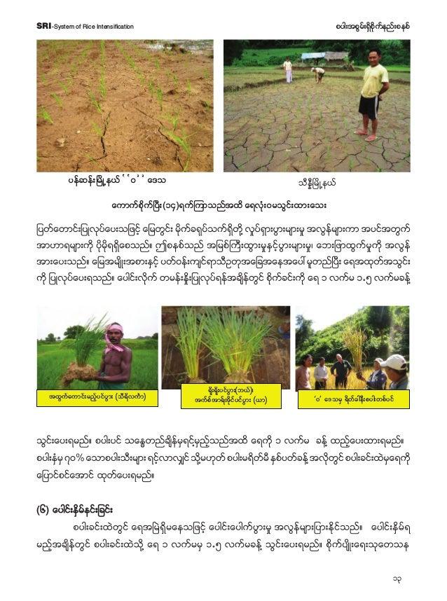 14 pyg;tpGrf;&Sdpdkufenf;pepfSRI-System of Rice Intensification