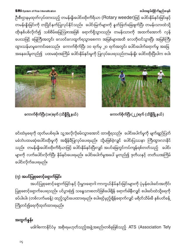 15 pyg;tpGrf;&Sdpdkufenf;pepfSRI-System of Rice Intensification