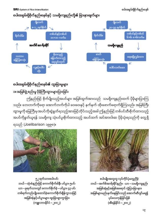 20 pyg;tpGrf;&Sdpdkufenf;pepfSRI-System of Rice Intensification