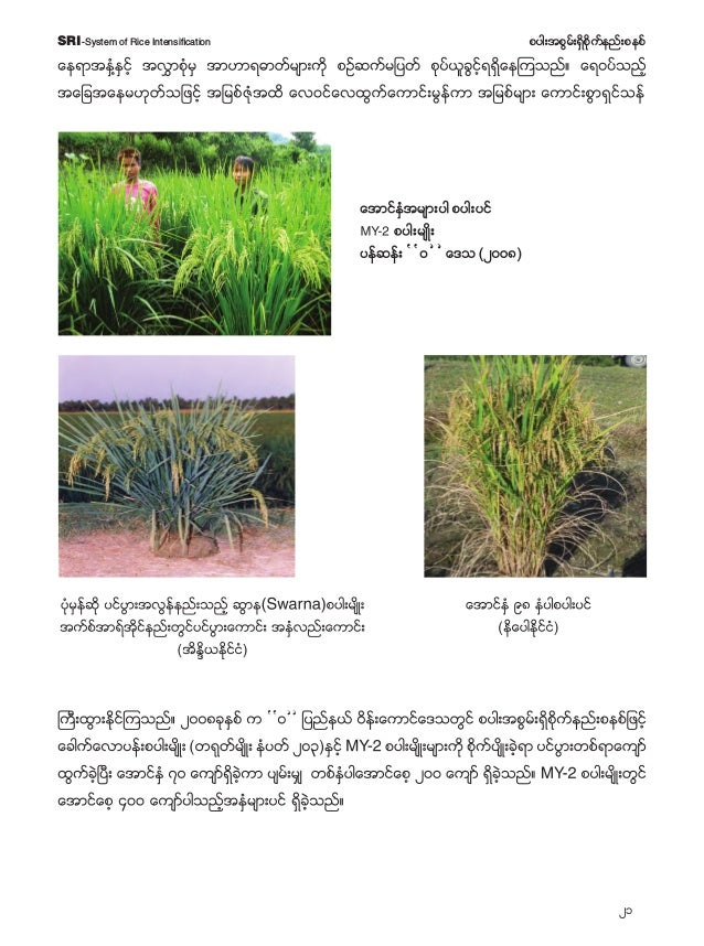 22 pyg;tpGrf;&Sdpdkufenf;pepfSRI-System of Rice Intensification