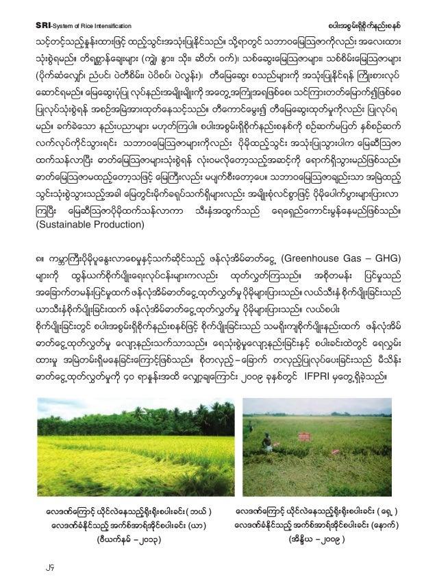 25 pyg;tpGrf;&Sdpdkufenf;pepfSRI-System of Rice Intensification