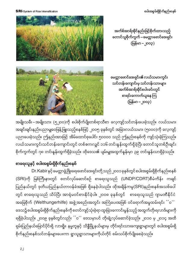 33 pyg;tpGrf;&Sdpdkufenf;pepfSRI-System of Rice Intensification