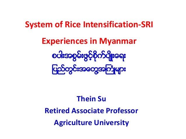 System of Rice Intensification-SRI Experiences in Myanmar စပါးအစြမ္းဖြင့္စိုက္ပ်ိဳးေရး ျပည္တြင္းအေတြ႔အႀကံဳမ်ား Thein Su Re...