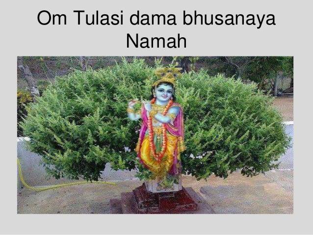 Om Tulasi dama bhusanaya Namah