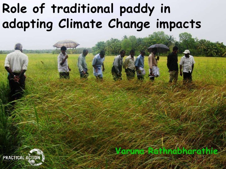 Role of traditional paddy in adapting Climate Change impacts                      Varuna Rathnabharathie