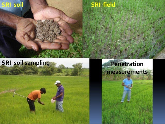 BIOLOGICAL FEASIBILITY AND ADAPTABILITY OF SRI UNDER LOCAL ENVIRONMENTS