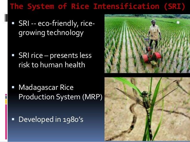 Major principles  Planting method – Wider spacing and single/double seedling  Soil fertility management – Plenty of orga...