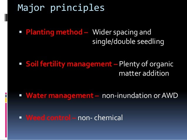 Wider spacing Single seedling Non-chemical weed control Wider spacingNon-inundation See the difference