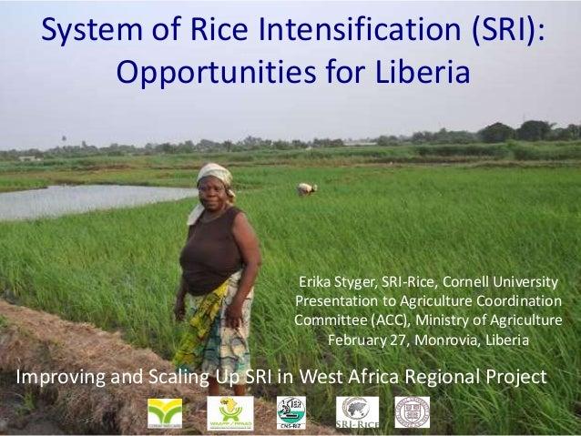System of Rice Intensification (SRI): Opportunities for Liberia  Erika Styger, SRI-Rice, Cornell University Presentation t...