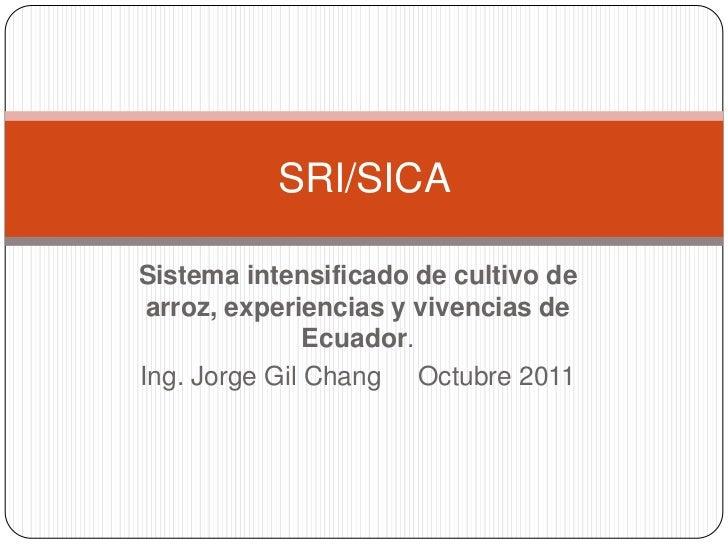 SRI/SICASistema intensificado de cultivo de arroz, experiencias y vivencias de               Ecuador.Ing. Jorge Gil Chang ...