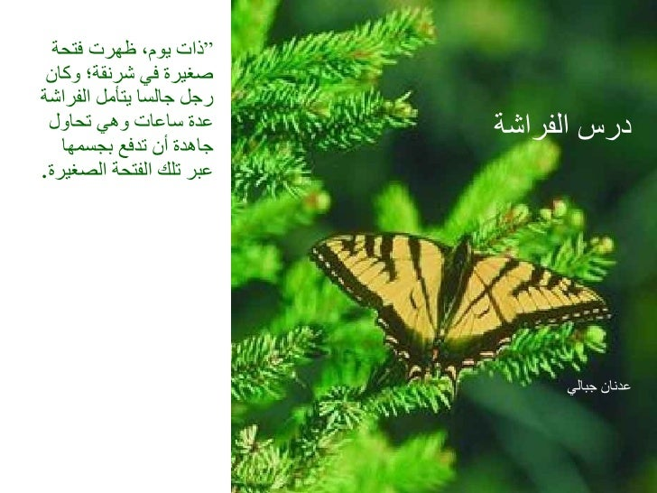 """درس الفراشة   عدنان جبالي """" ذات يوم، ظهرت فتحة صغيرة في شرنقة؛ وكان رجل جالسا يتأمل الفراشة عدة ساعات وهي تحاول جاهدة أن ت..."""