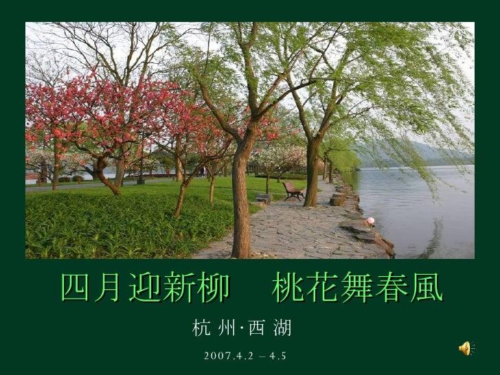 四月迎新柳 杭 州‧西 湖 2007.4.2 – 4.5 桃花舞春風