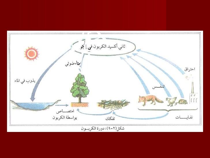 دورة الكربون