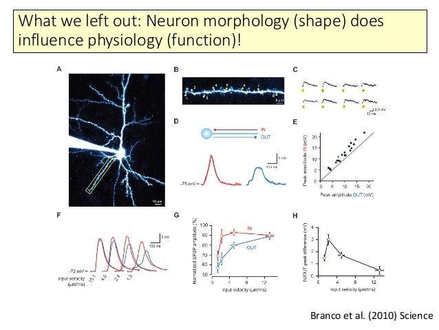 Single neuron models