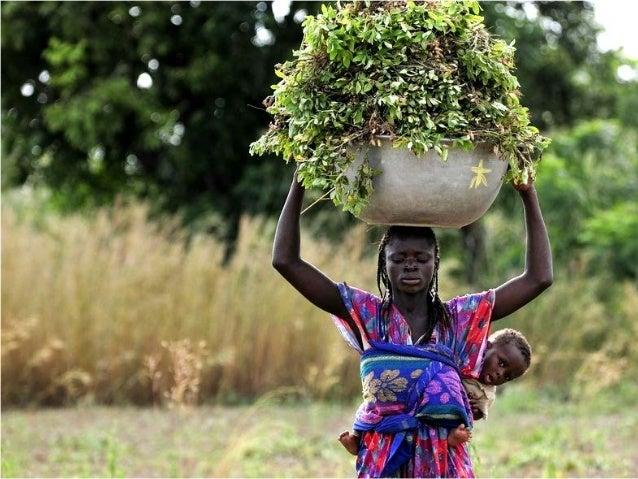 Sustainable research partnerships for global food security  Since 1967 / Science to cultivate change  www.ciat.cgiar.org