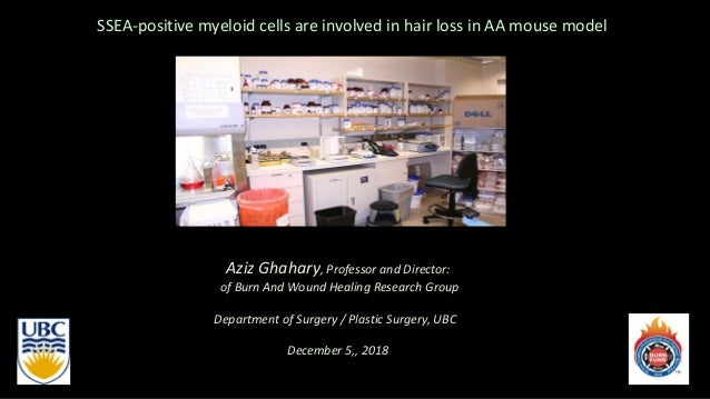 SSEA-positive myeloid cells are involved in hair loss in AA mouse model Aziz Ghahary, Professor and Director: of Burn And ...