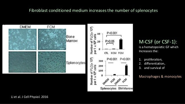 Identifying M‐CSF in Fibroblast Conditioned Medium FCM fractionation Identifying M-CSF in FCM Li et al. J Cell Physiol. 20...
