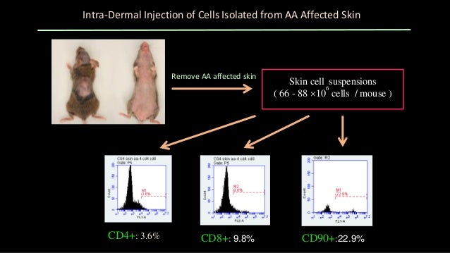 FACS analysis of CD4+ and CD8+ T cells in the cultured mixture of skin cells isolated from AA affected mice Suspended cell...