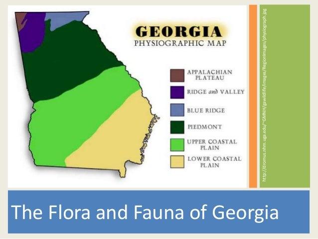 The Flora and Fauna of Georgia http://dromus.nhm.uga.edu/~GMNH/gawildlife/images/RegionImages/physiograph.jpg