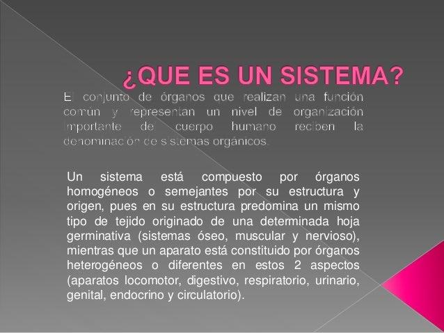 Un sistema está compuesto por órganos homogéneos o semejantes por su estructura y origen, pues en su estructura predomina ...