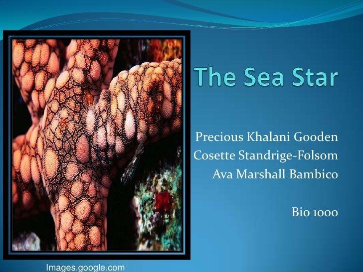The Sea Star<br />Precious Khalani Gooden<br />Cosette Standrige-Folsom<br />Ava Marshall Bambico<br />Bio 1000<br />Image...