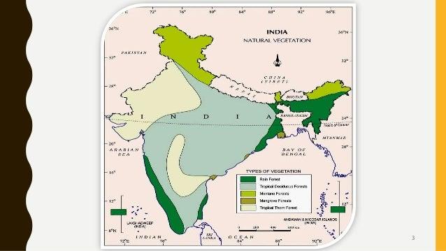 Natural Vegetation and wildlife of india Slide 3