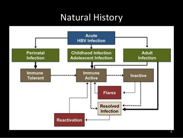 Natural History Of Acute Hepatitis B
