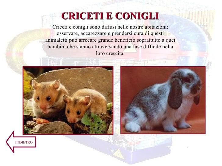 Criceti e conigli sono diffusi nelle nostre abitazioni: osservare, accarezzare e prendersi cura di questi animaletti può a...