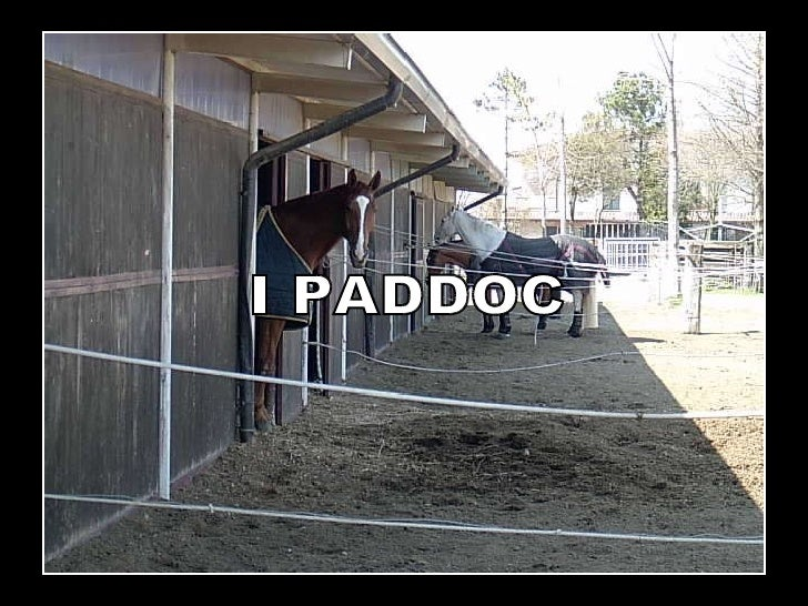 I PADDOC
