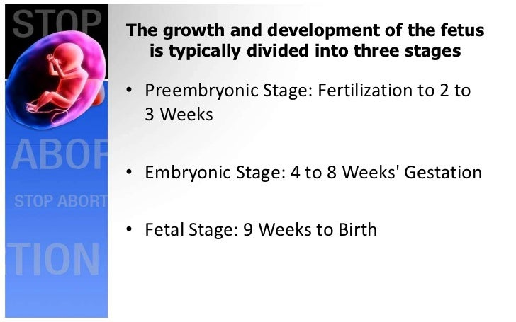 Stages Of Fetal Growth And DevelopmentHannilore Villamor RN 2