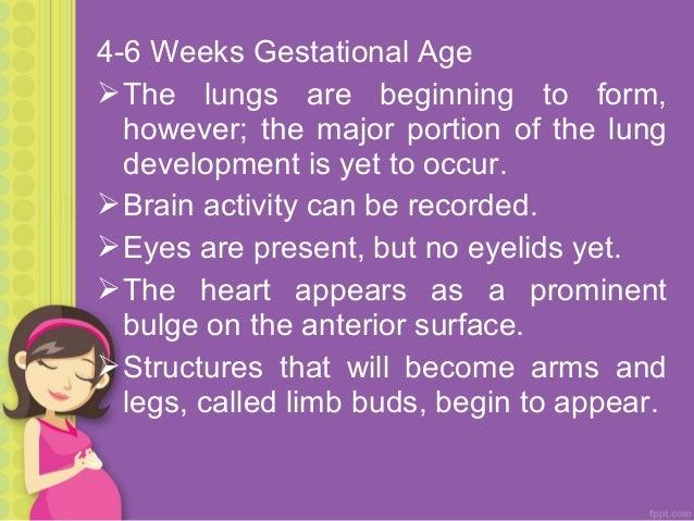 8 Weeks Gestational Age