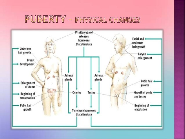what are the 5 stages of puberty