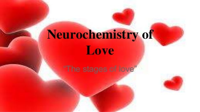 """Neurochemistry of Love """"The stages of love"""""""