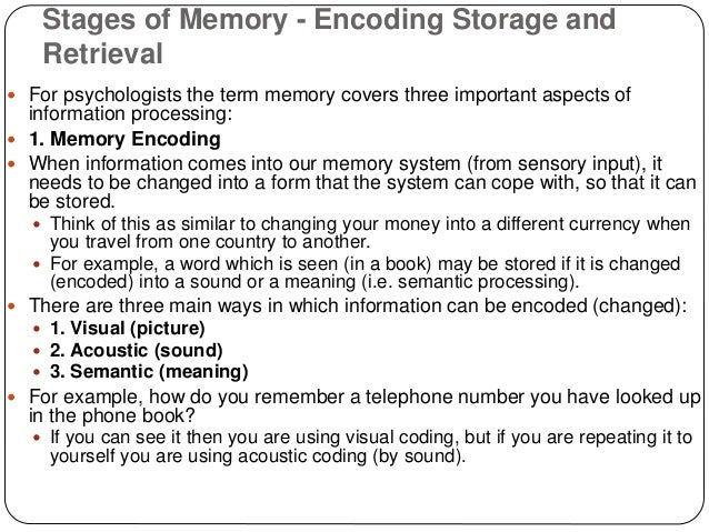 Stages of memory encoding storage and retrieval