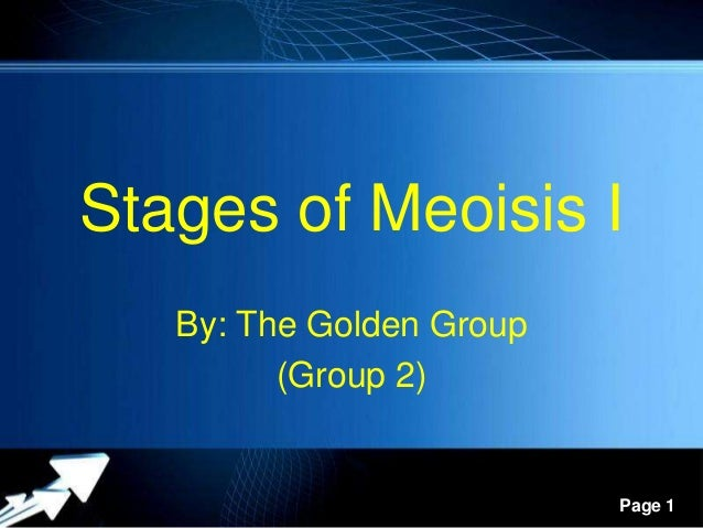 Powerpoint Templates Page 1 Stages of Meoisis I By: The Golden Group (Group 2)