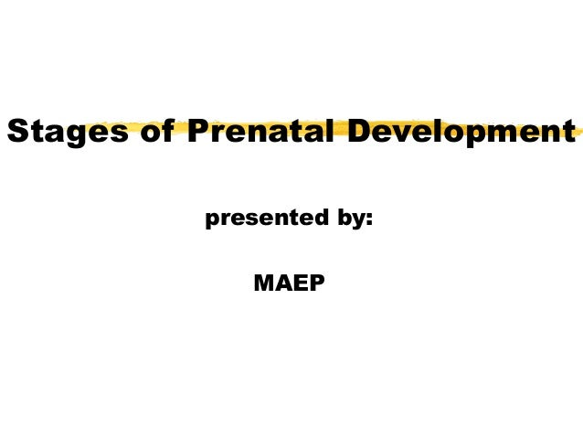 Stages of Prenatal Development presented by: MAEP