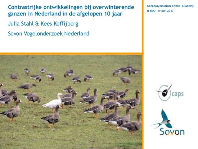 Ganzensymposium Fryske Akademy & NOU, 19 mei 2017 Contrastrijke ontwikkelingen bij overwinterende ganzen in Nederland in d...