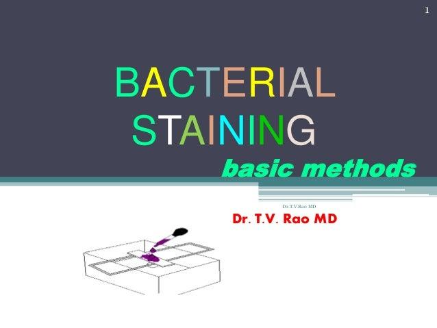 BACTERIAL STAINING basic methods Dr. T.V. Rao MD 1 Dr.T.V.Rao MD