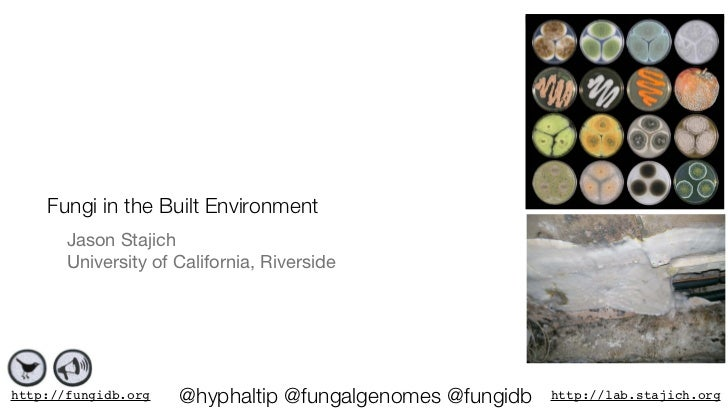 Fungi in the Built Environment       Jason Stajich       University of California, Riversidehttp://fungidb.org   @hyphalti...
