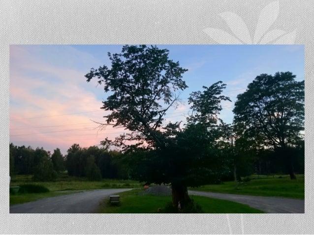 Stallet i Tyresö sent på kvällen av Ingemar Pongratz Slide 2