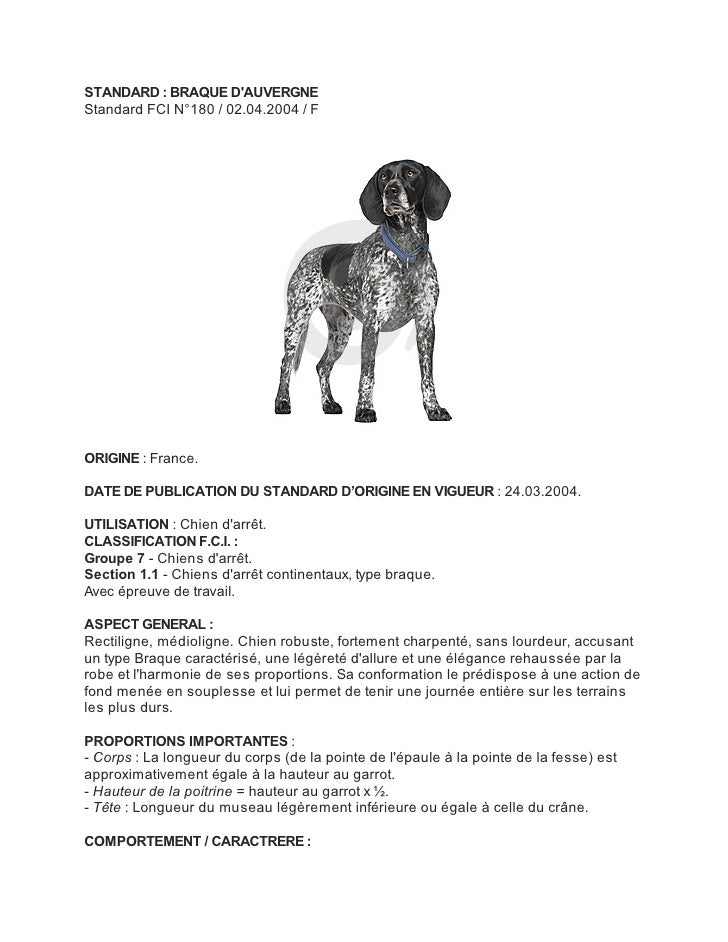 STANDARD : BRAQUE DAUVERGNEStandard FCI N°180 / 02.04.2004 / FORIGINE : France.DATE DE PUBLICATION DU STANDARD D'ORIGINE E...