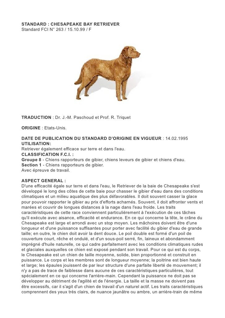 STANDARD : CHESAPEAKE BAY RETRIEVERStandard FCI N° 263 / 15.10.99 / FTRADUCTION : Dr. J.-M. Paschoud et Prof. R. TriquetOR...