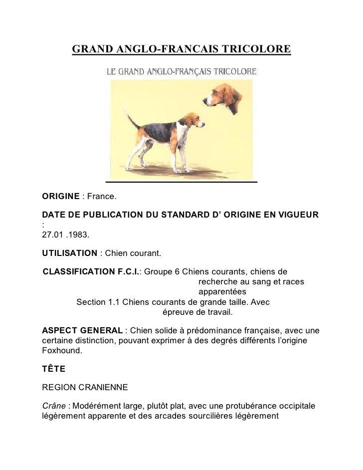GRAND ANGLO-FRANCAIS TRICOLOREORIGINE : France.DATE DE PUBLICATION DU STANDARD D' ORIGINE EN VIGUEUR:27.01 .1983.UTILISATI...