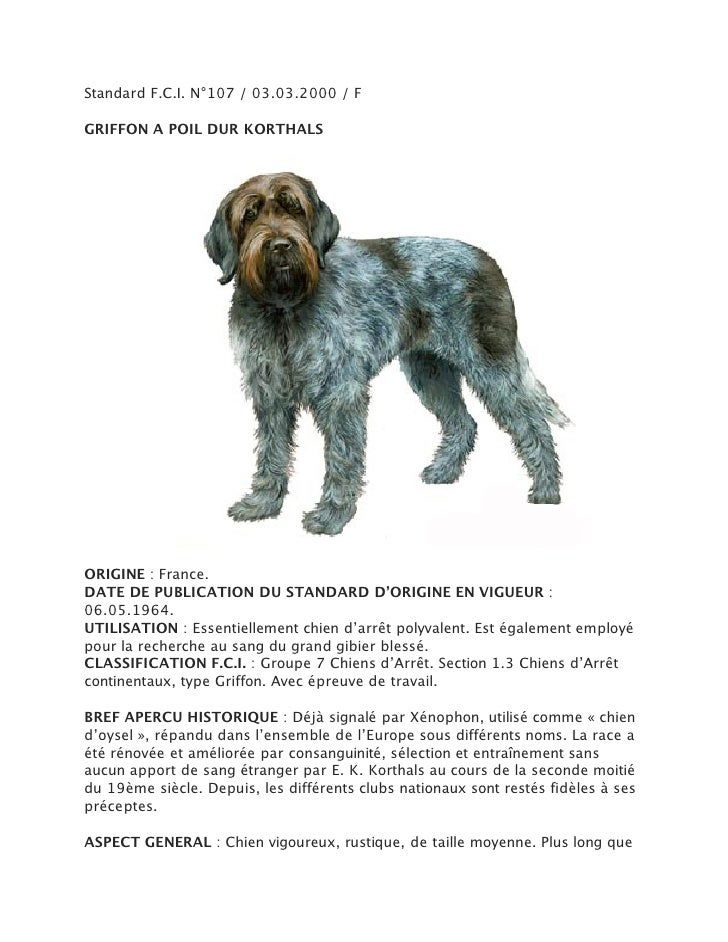 Standard F.C.I. N°107 / 03.03.2000 / FGRIFFON A POIL DUR KORTHALSORIGINE : France.DATE DE PUBLICATION DU STANDARD D'ORIGIN...