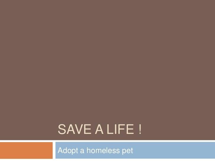 SAVE A LIFE !Adopt a homeless pet